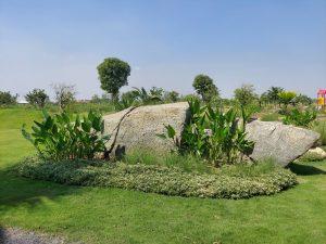 đất trồng cây long phước, đất vườn long phước, nhà vườn long phước, cù lao long phước, đất bờ sông long phước
