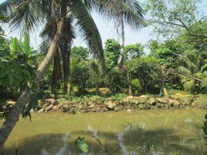 Trang trại Long Phước , bán ha đất vườn long phước,cù lao long phước, đảo ngọc long phước, ốc đảo long phước, đất vườn long phước nhà vườn long phước