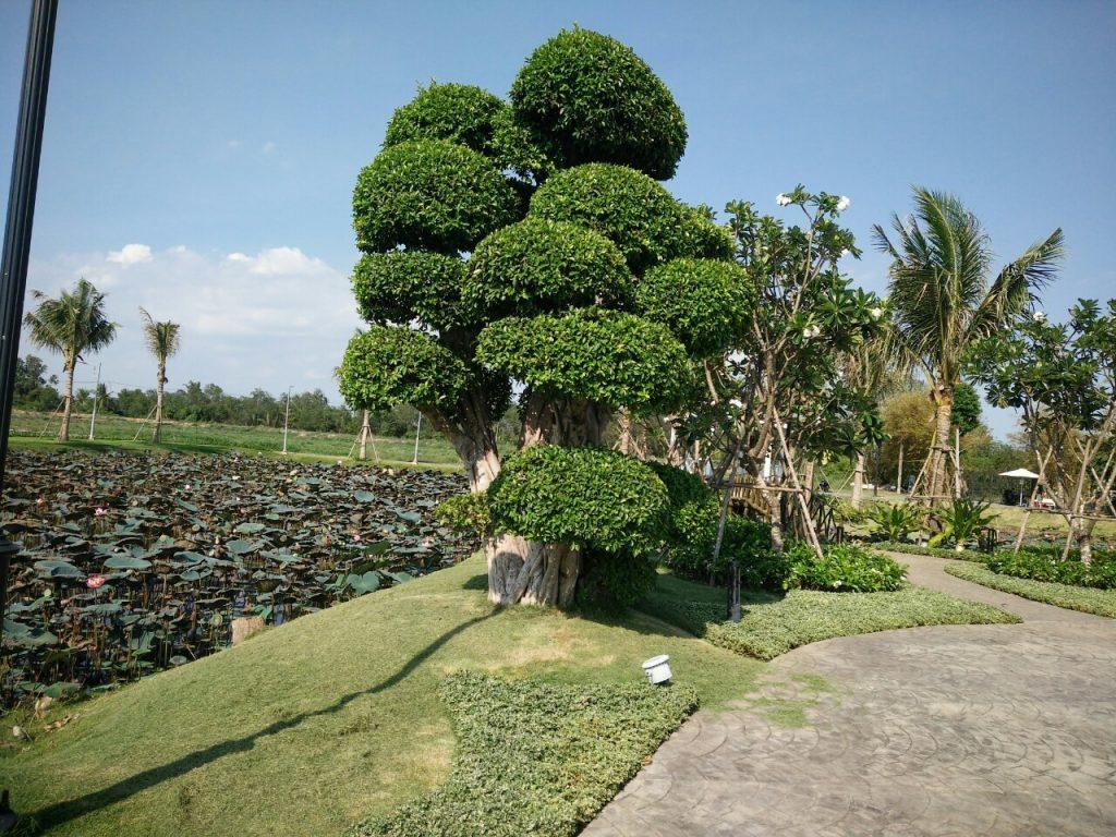 nhà vườn long phước quận 9, đất vườn long phước, đảo ngọc long phước, đất trồng cây long phước, đất thổ cư long phước